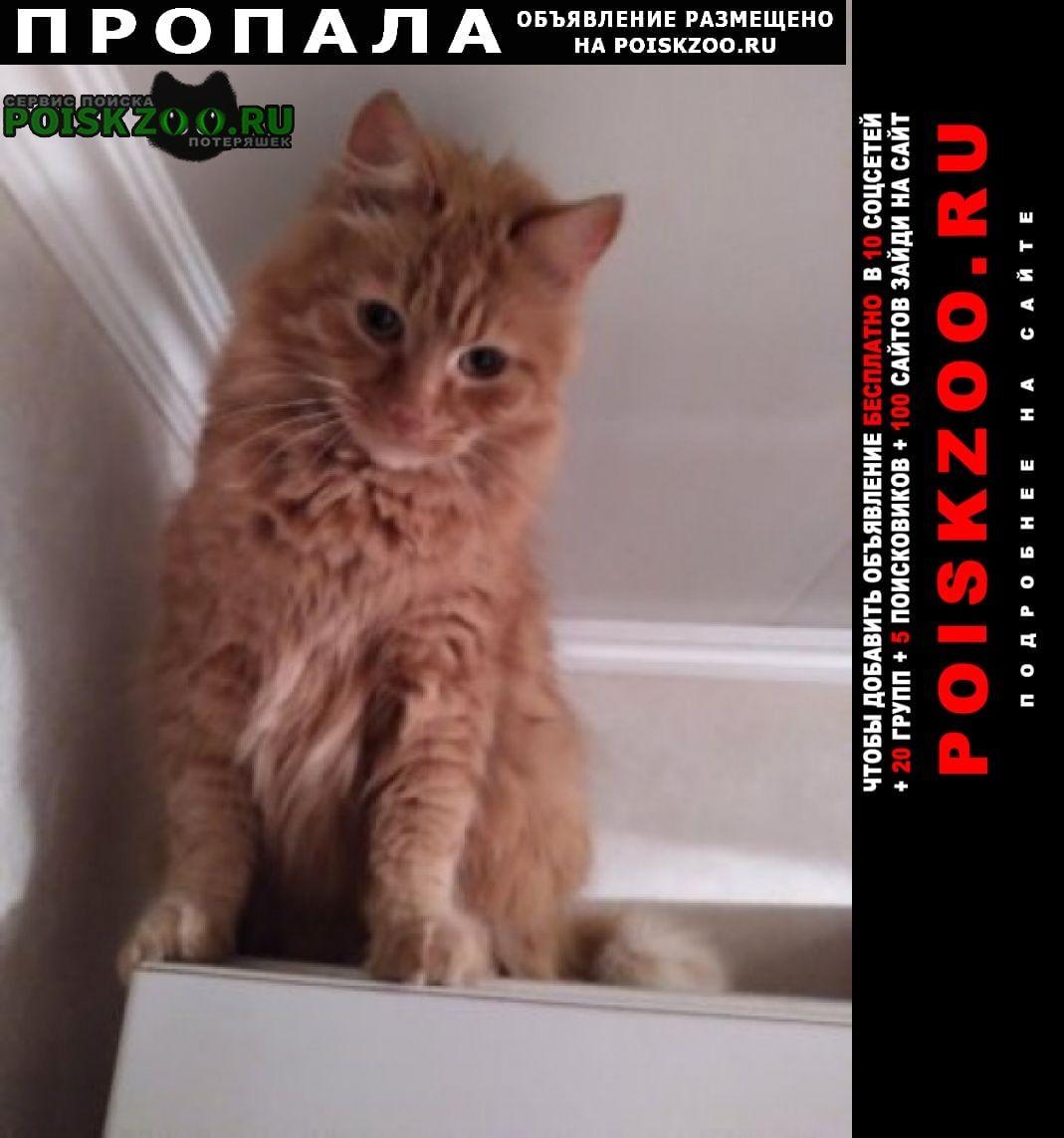 Калининград (Кенигсберг) Пропал кот 20 февраля по кличке лева