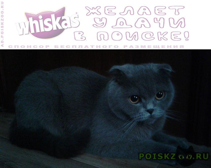 Пропала кошка помогите найти г.Краснодар