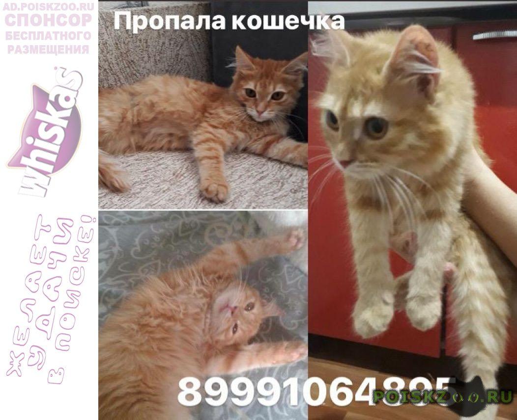 Пропала кошка г.Балаково