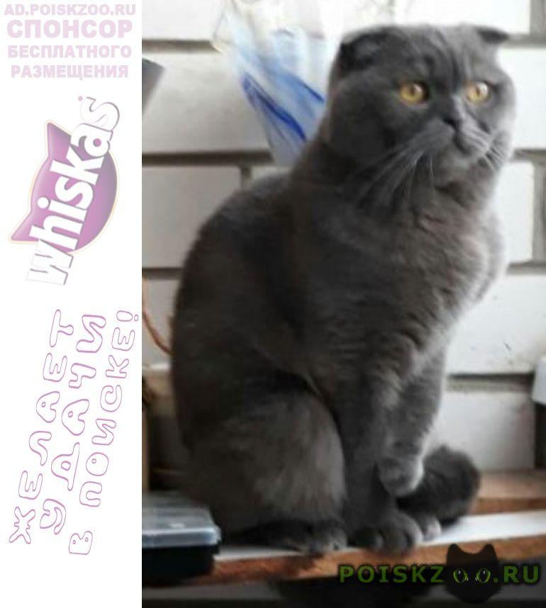 Пропал кот г.Йошкар-Ола