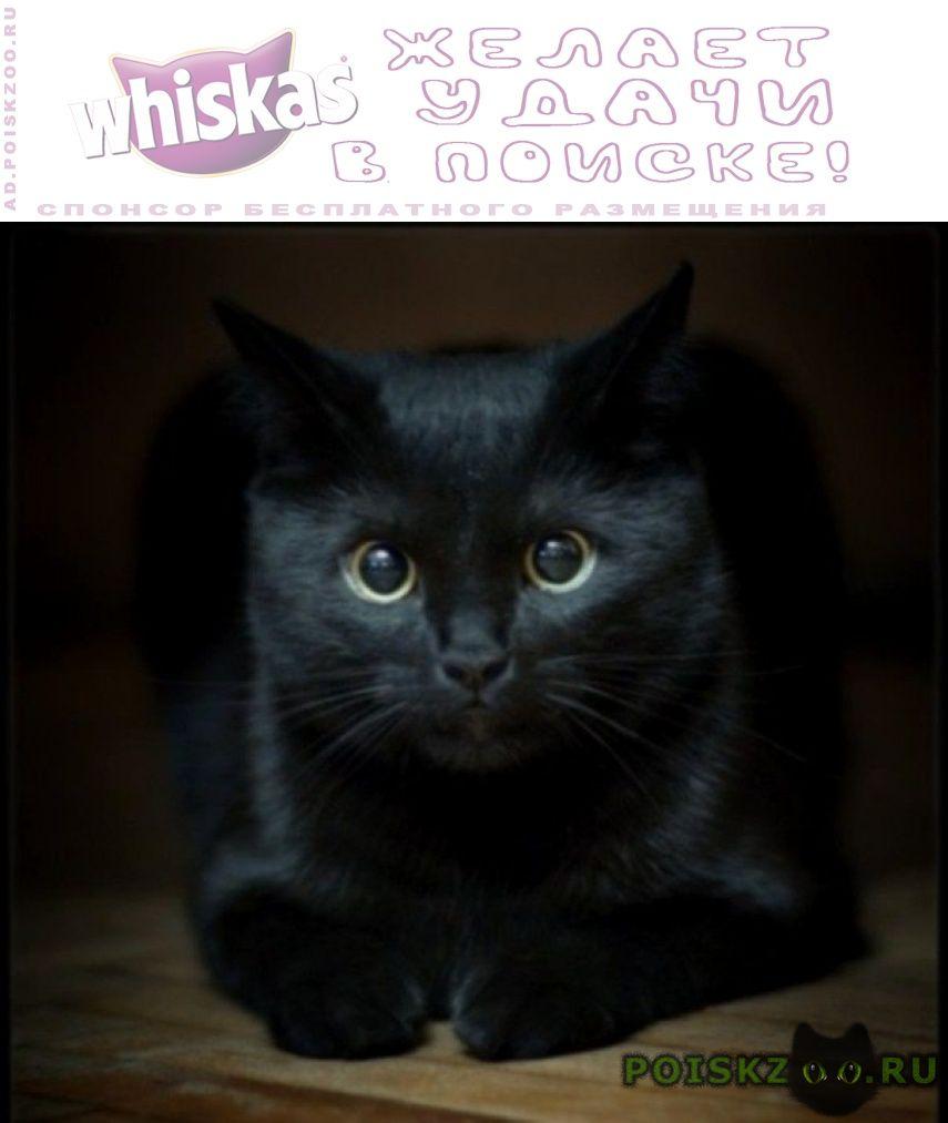 Пропала кошка в р-не буревестн черн. г.Екатеринбург