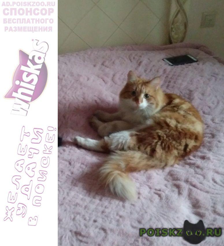Пропал кот рыже-белый в г.Троицк