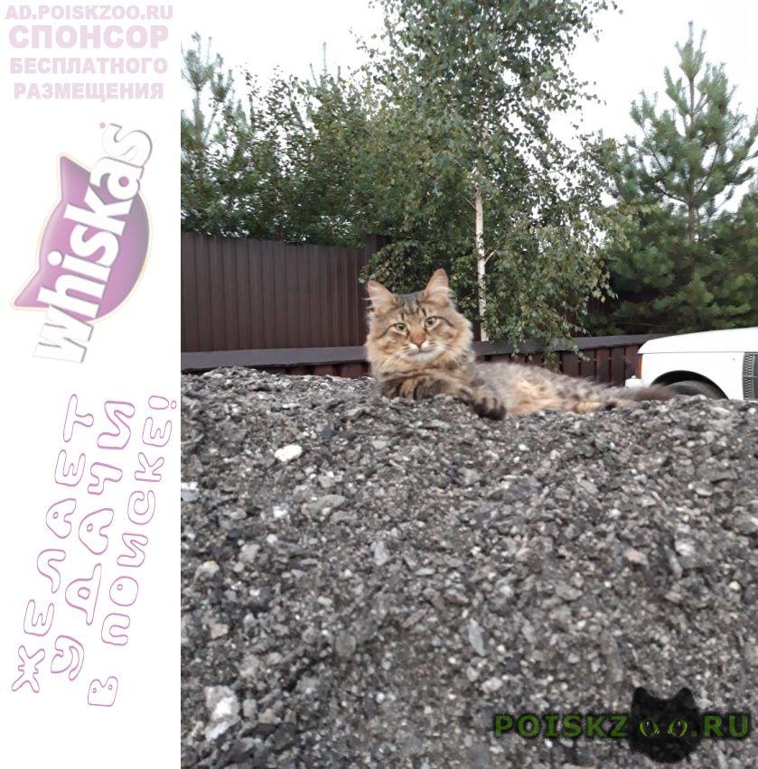 Пропал кот г.Пущино