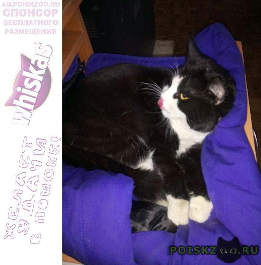 Пропал кот кузя г.Йошкар-Ола