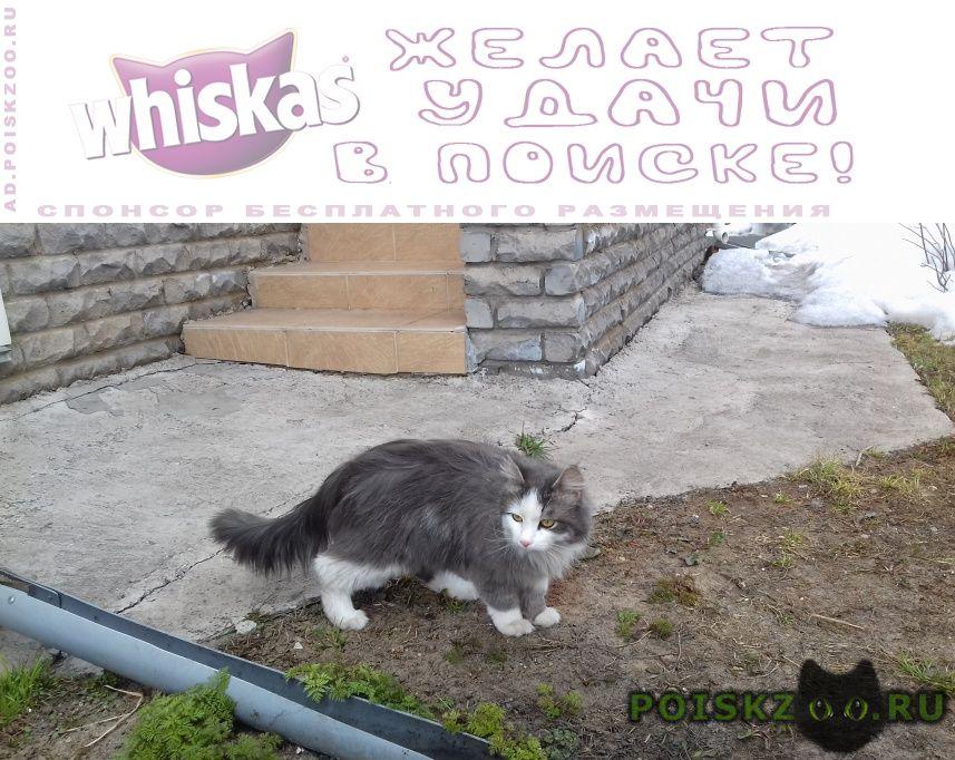 Пропал кот г.Киров (Кировская обл.)