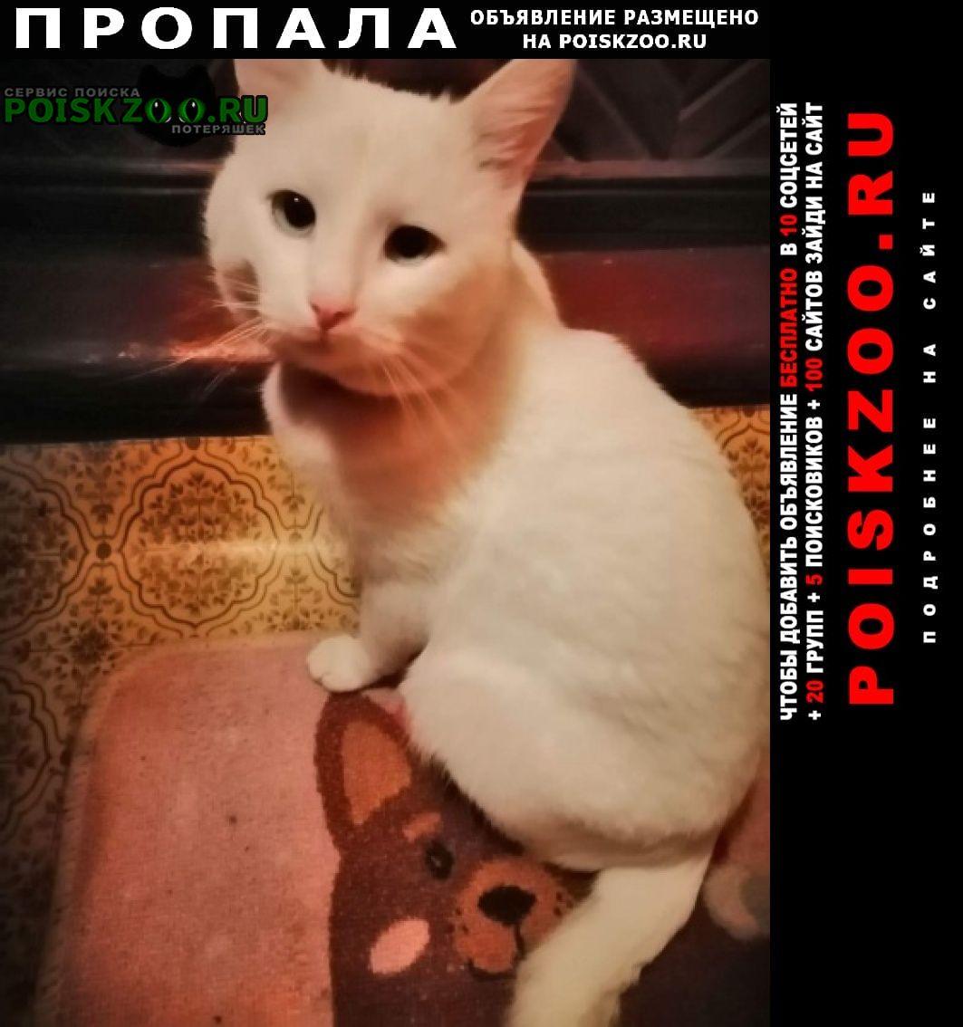 Пропал кот Иваново