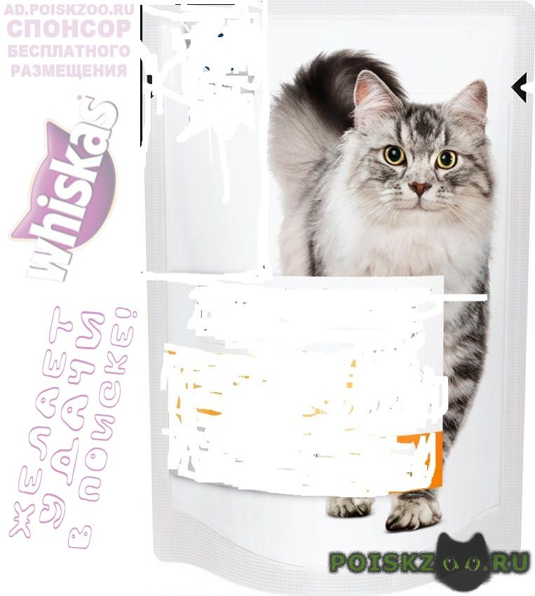 Пропала кошка мымра г.Зеленоград