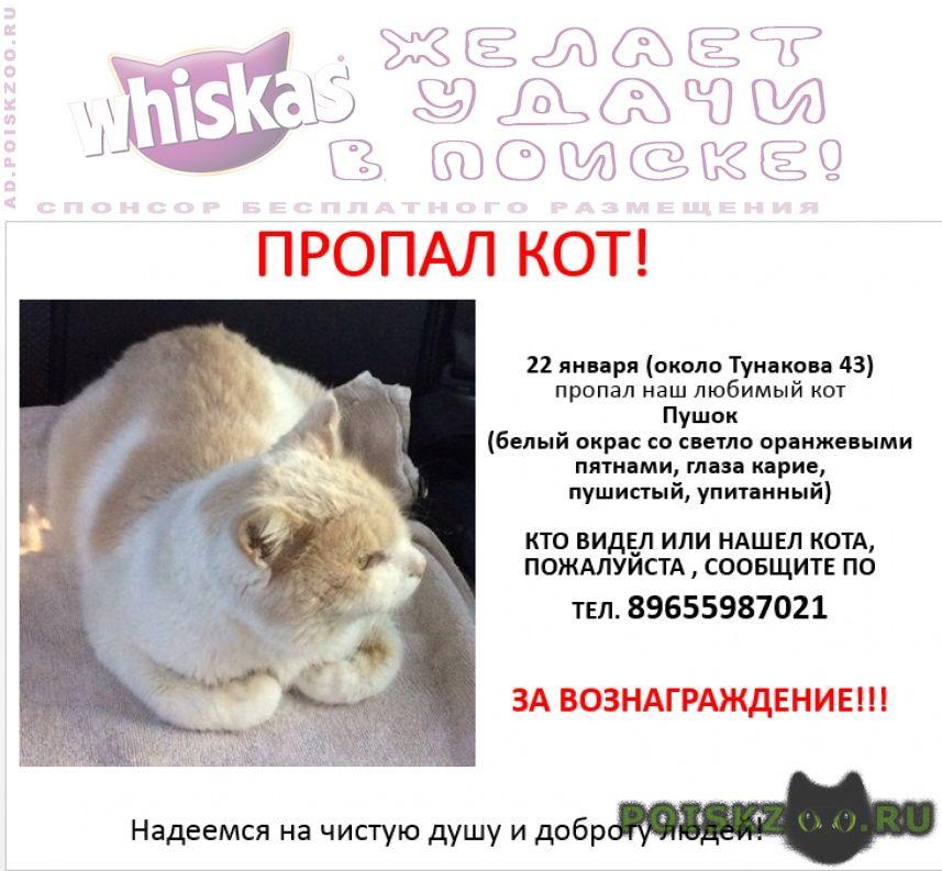 Пропал кот ул. тунакова г.Казань