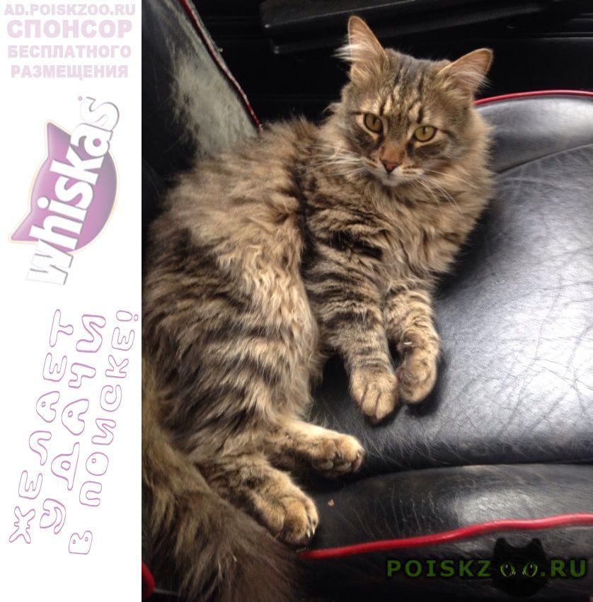 Пропал кот помогите найти г.Нарофоминск