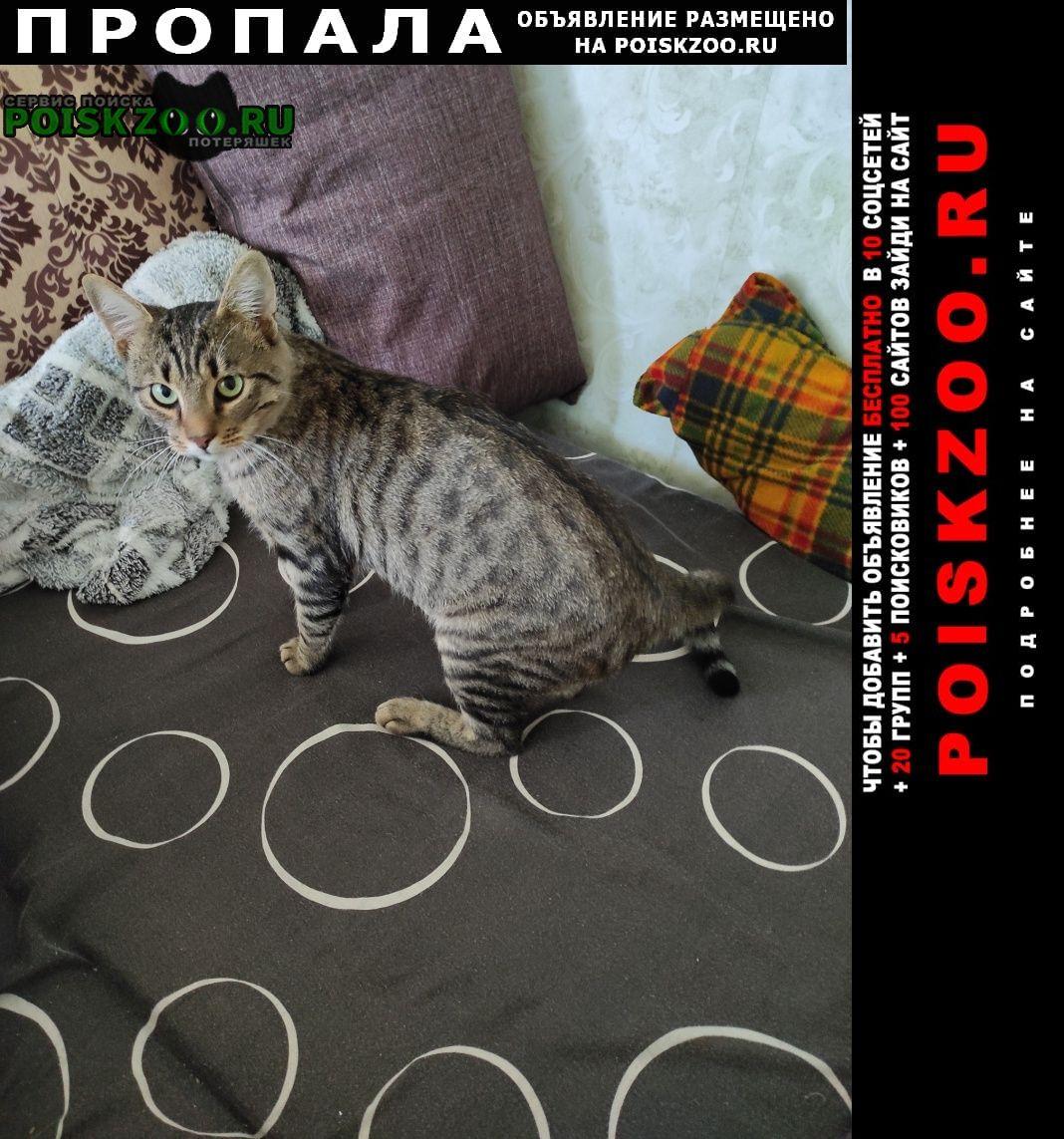 Пропала кошка.. Севастополь