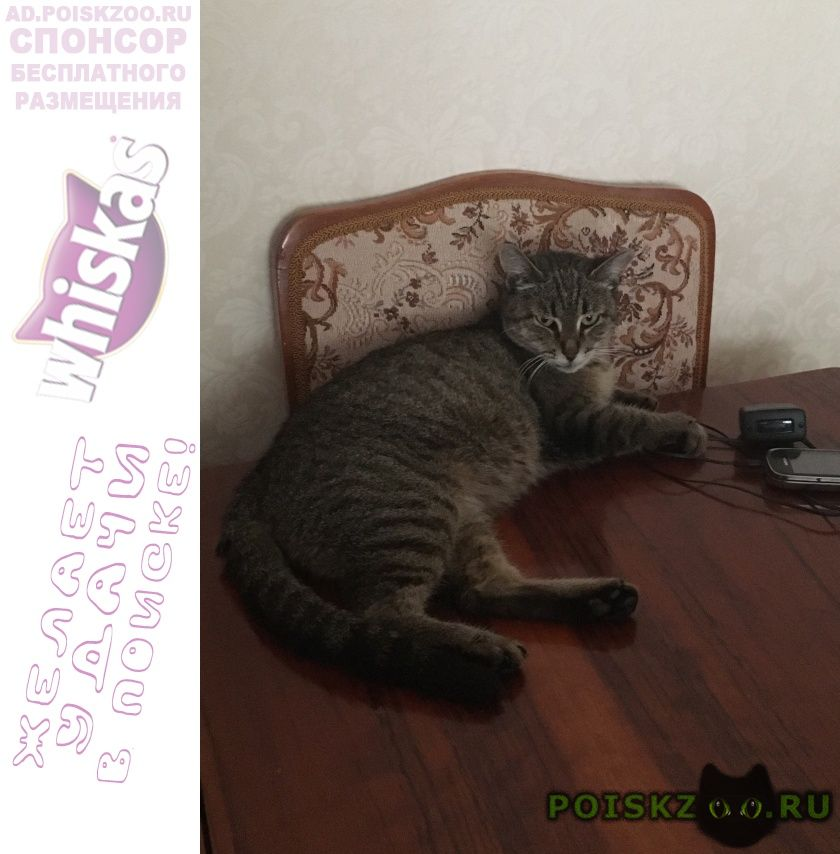 Пропала кошка г.Иноземцево