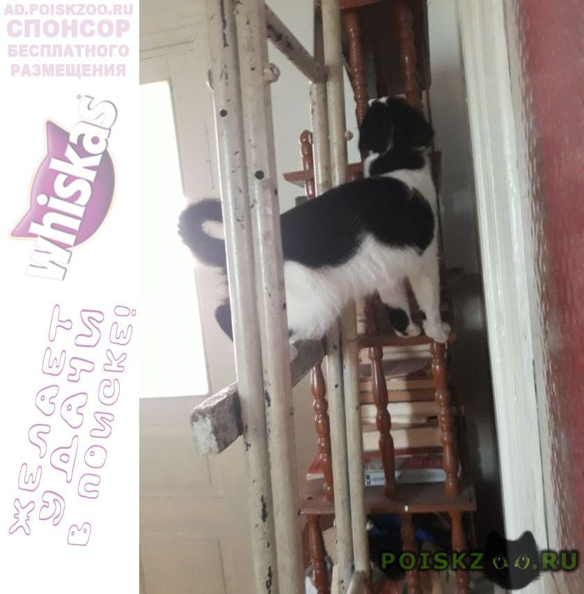 Пропал кот г.Ставрополь