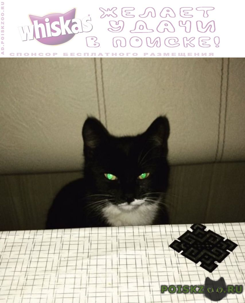 Пропала кошка #; #; г.Владикавказ