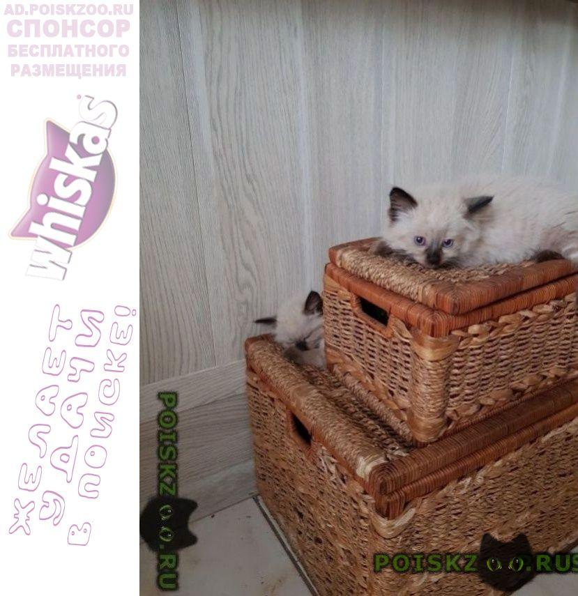 Пропала кошка потерялись два котенка  г.Магнитогорск
