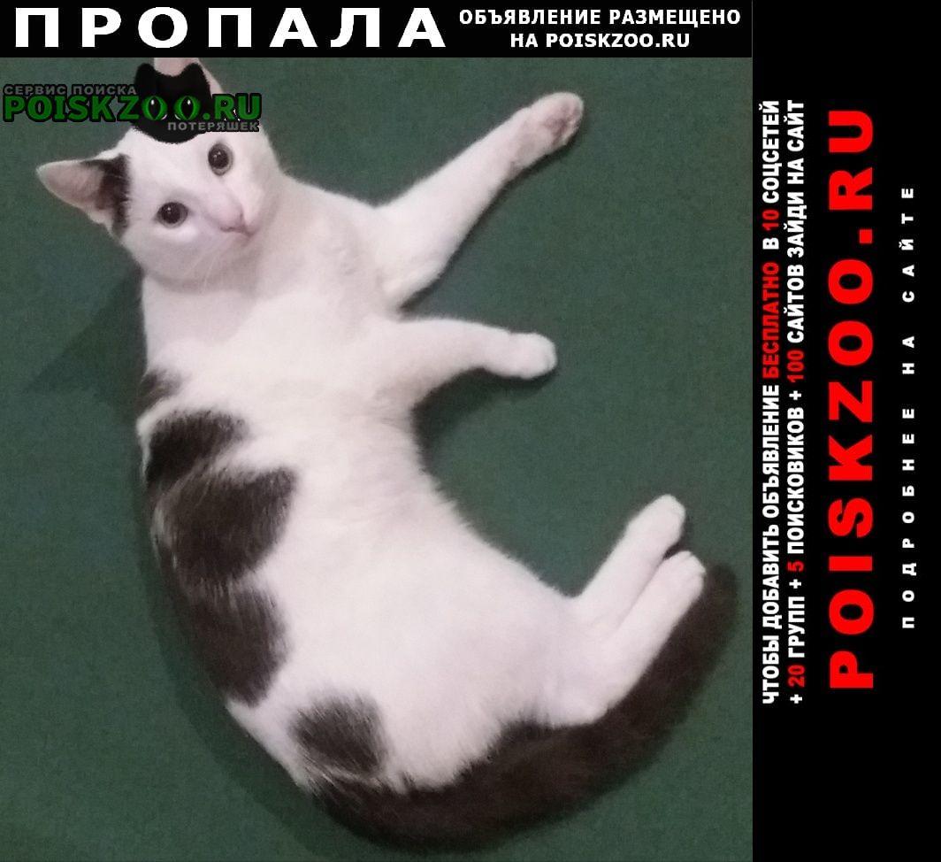 Пропал кот черно-белый в синей шлейке Тучково