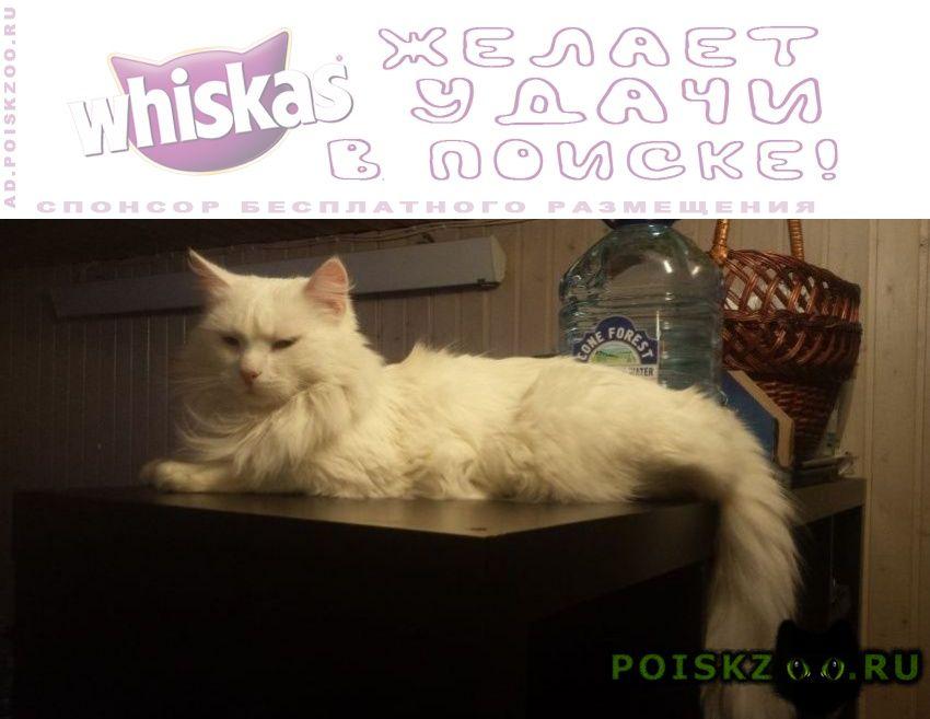 Пропала кошка г.Солнечногорск