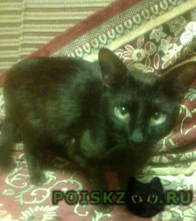 Пропал кот любимый г.Смоленск