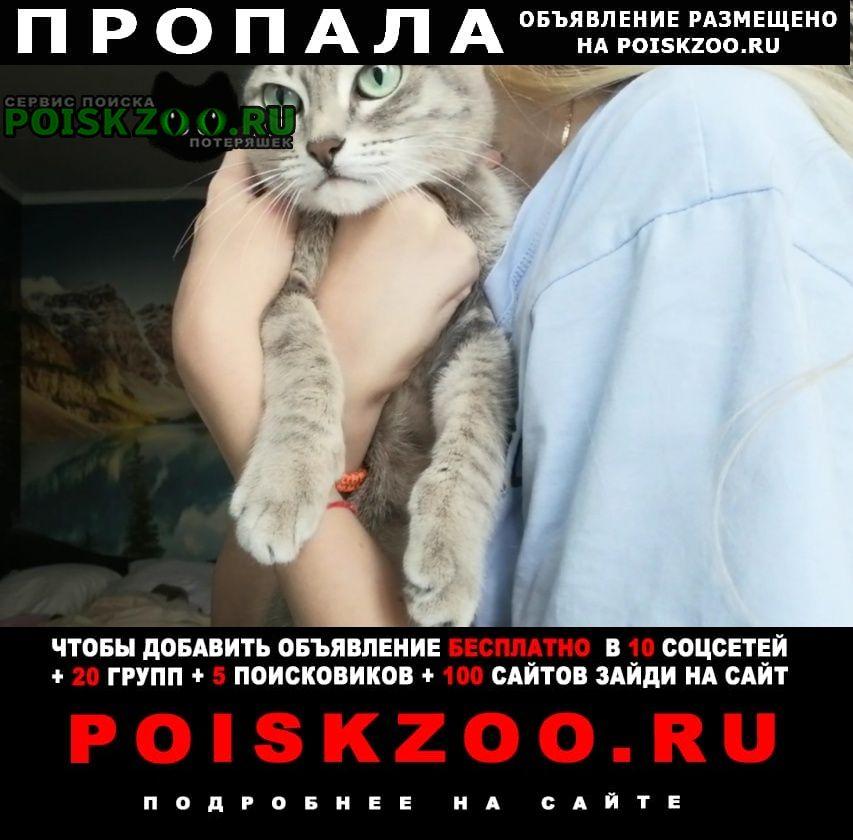 Пропала кошка Каменск-Уральский