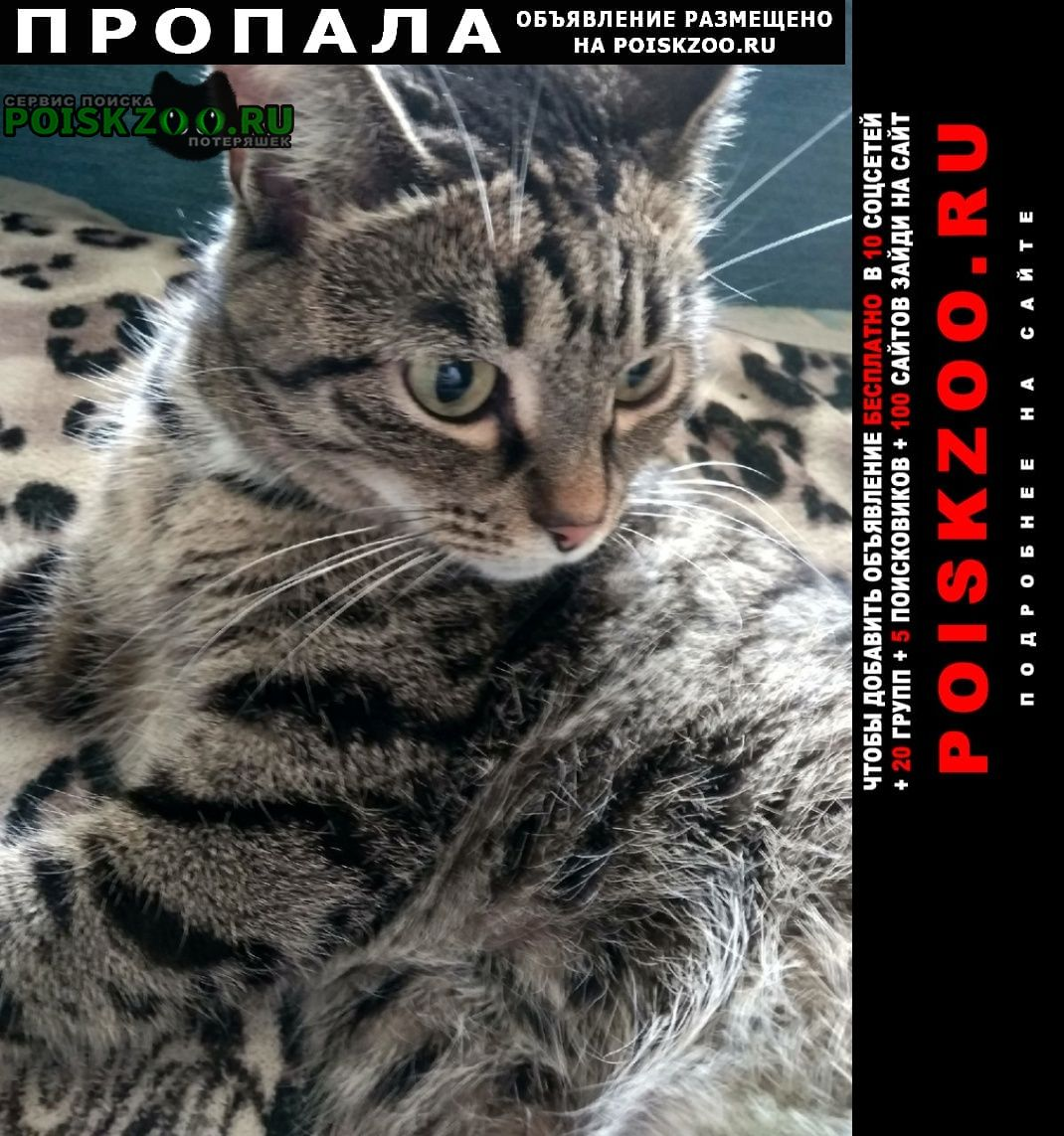 Пропала кошка Омск
