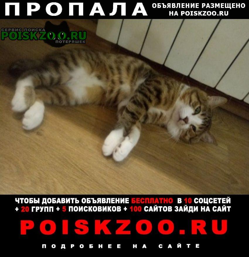 Хабаровск Пропала кошка кот