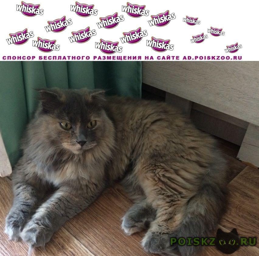 Пропала кошка или украдена г.Ессентуки