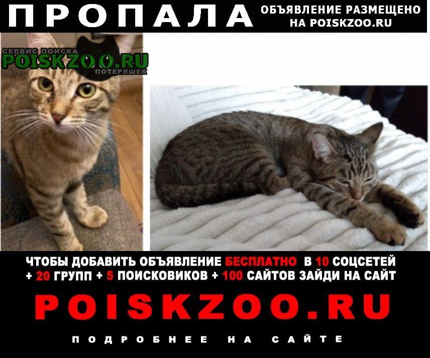 Пропал кот в районе царицино Москва