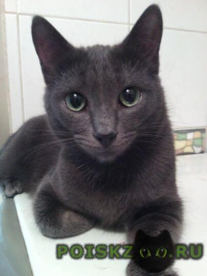 Пропала кошка августа потерялась г.Омск