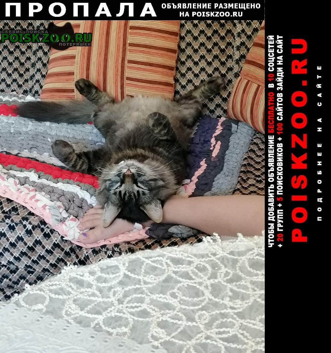 Волгоград Пропала кошка кастроированный пушистый кот, 2, 5-3 года