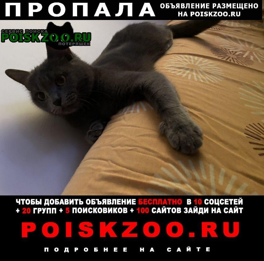 Пропала кошка британская (ул.лахти) г.Запорожье