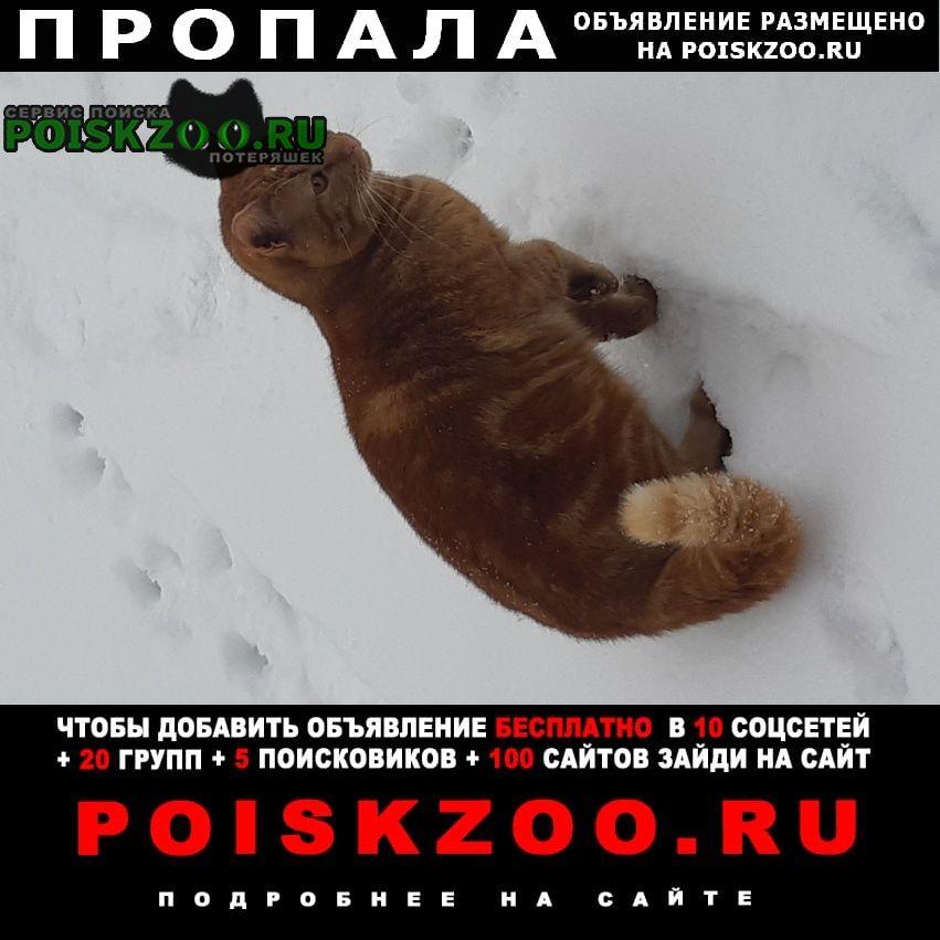 Пропал кот Ногинск