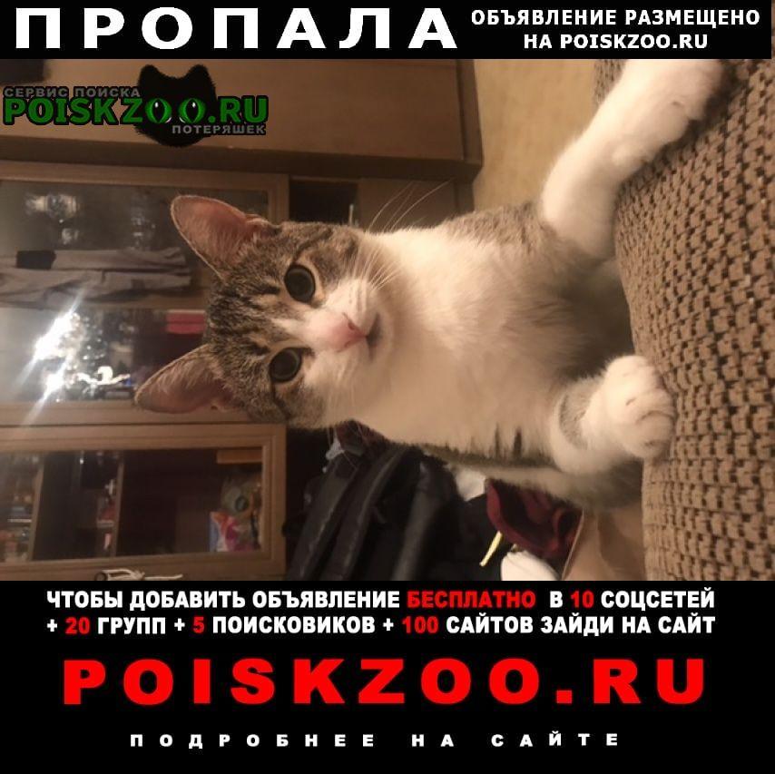 Пропал кот умоляю, нужна помощь г.Кемерово