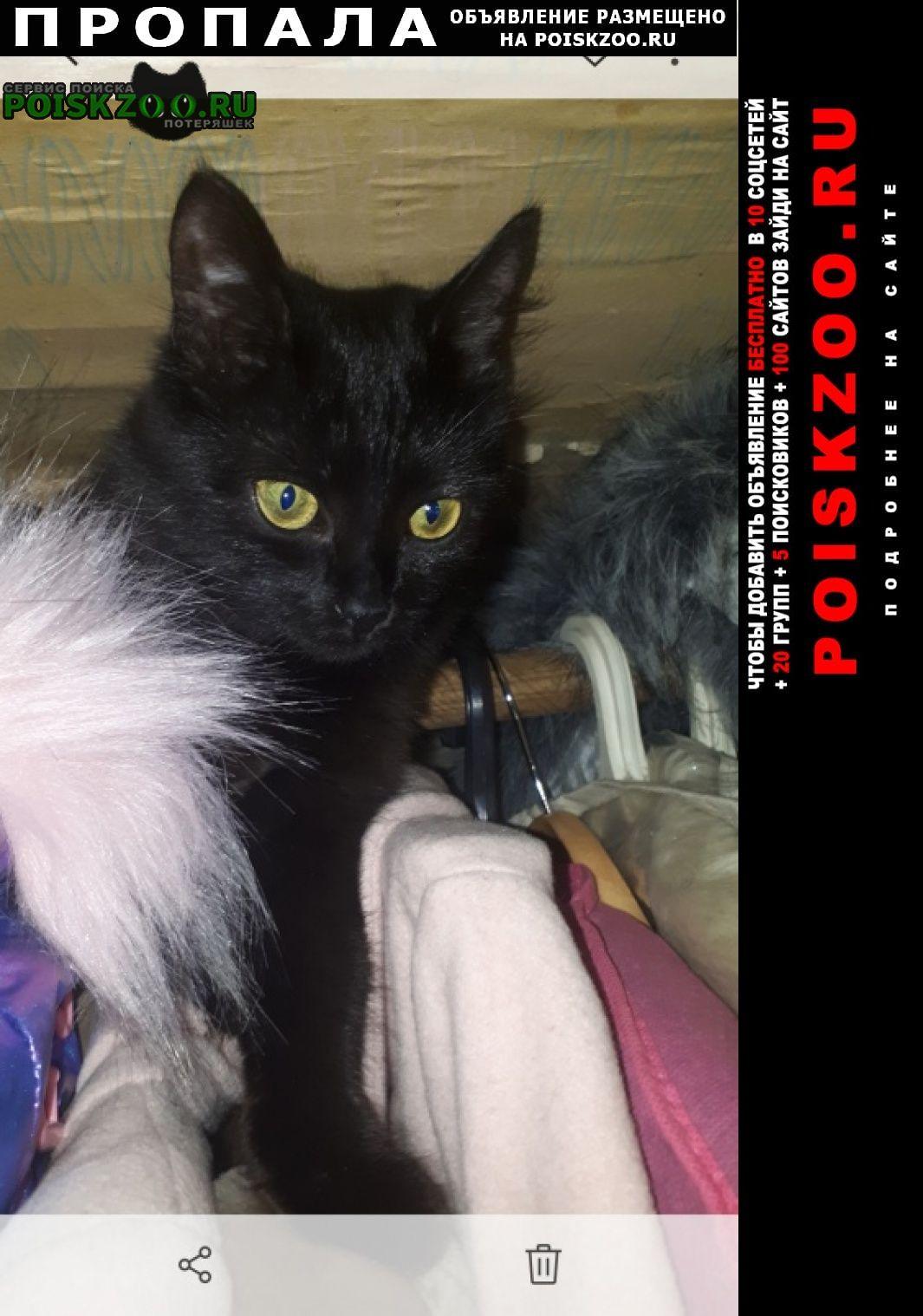 Пропала кошка черная кошечка Москва