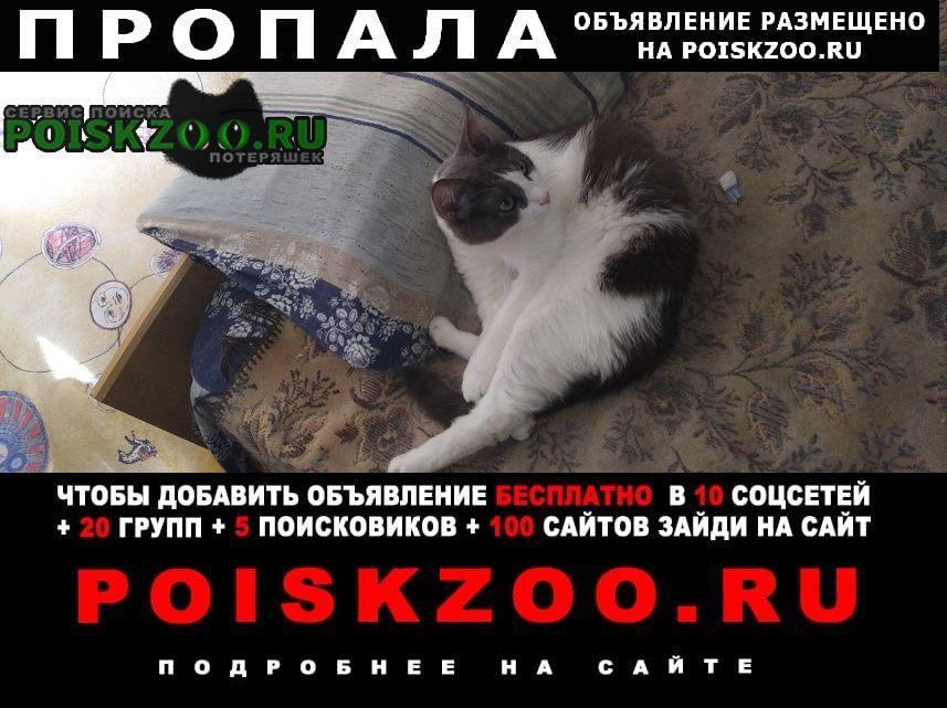 Пропал кот шустрик Голицыно (Московская обл.)