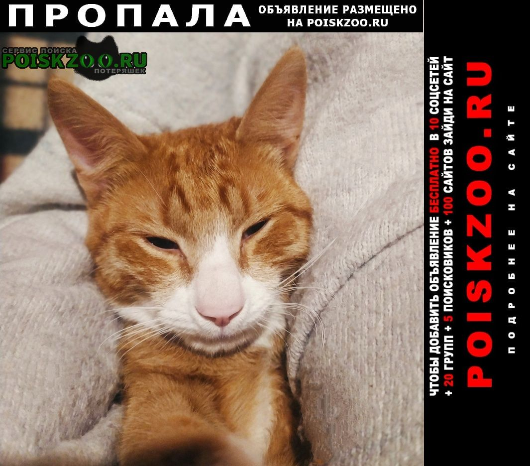 Пропал котик Малаховка