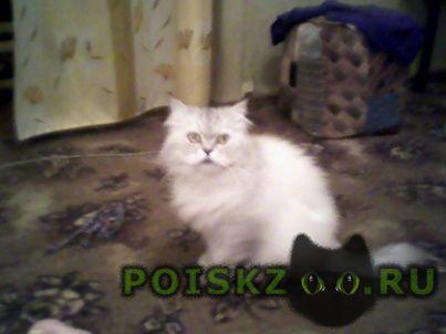 Пропал кот, белый, пушистый. г.Владимир