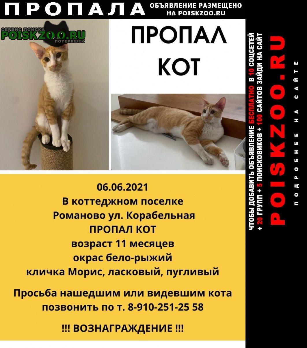 Пропал кот породы питерболд Липецк