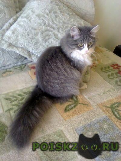 Пропала кошка г.Верхняя Пышма