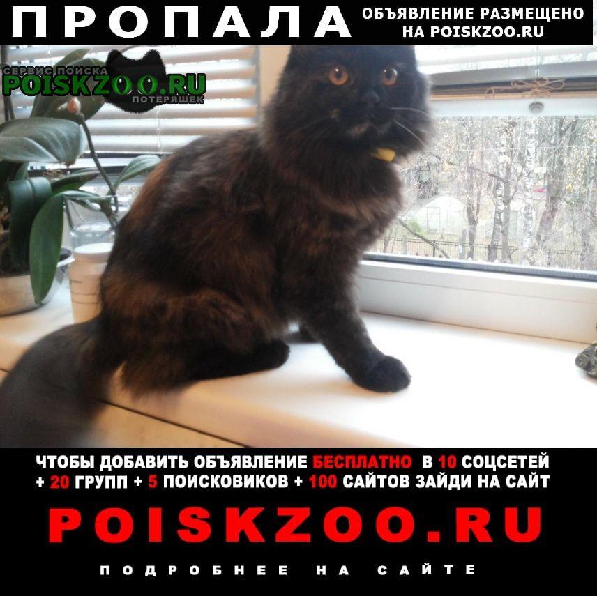 Пропала кошка зовут маруся, очень доверчивая Ивантеевка (Московская обл.)