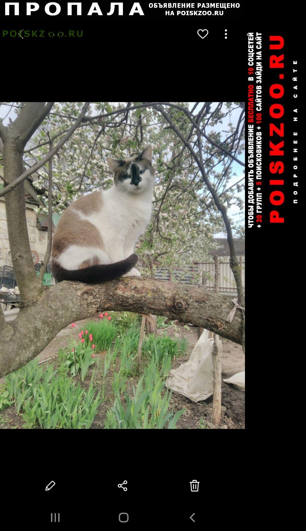 Пропала кошка домашняя г.Курск