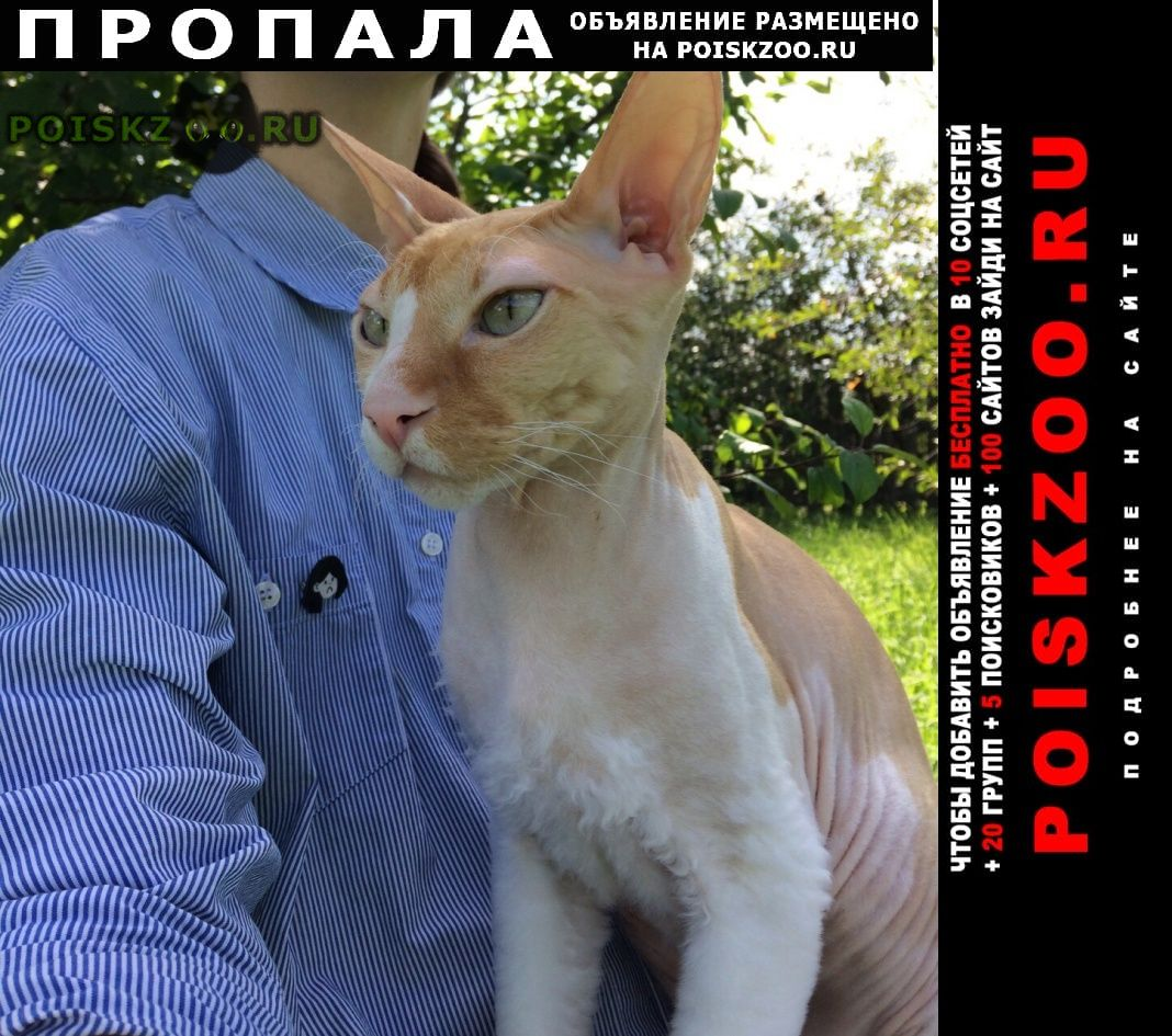 Пропал кот метис сфинкса, мальчик г.Богородск