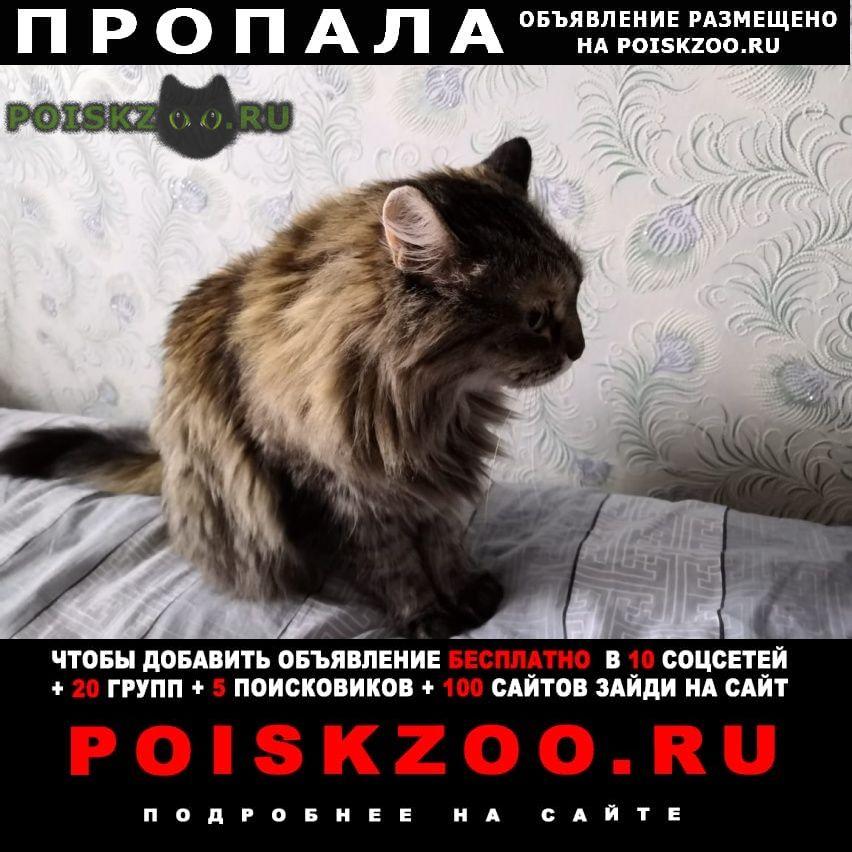 Пропала кошка, петрозаводская, 15 г.Москва