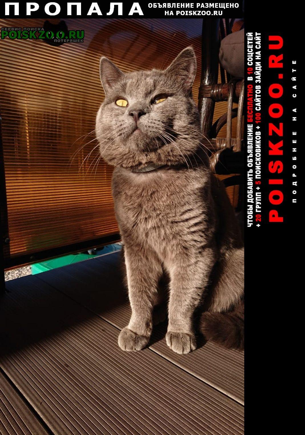 Пропал кот, полтора года, серый британец. Заокский