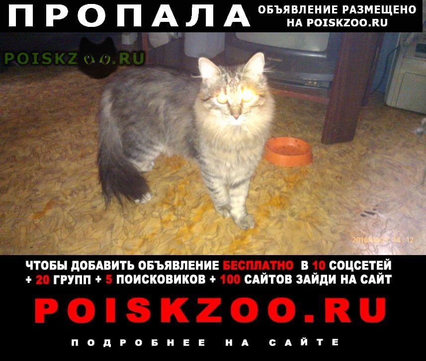 Пропал кот московский микрорайон г.Иваново