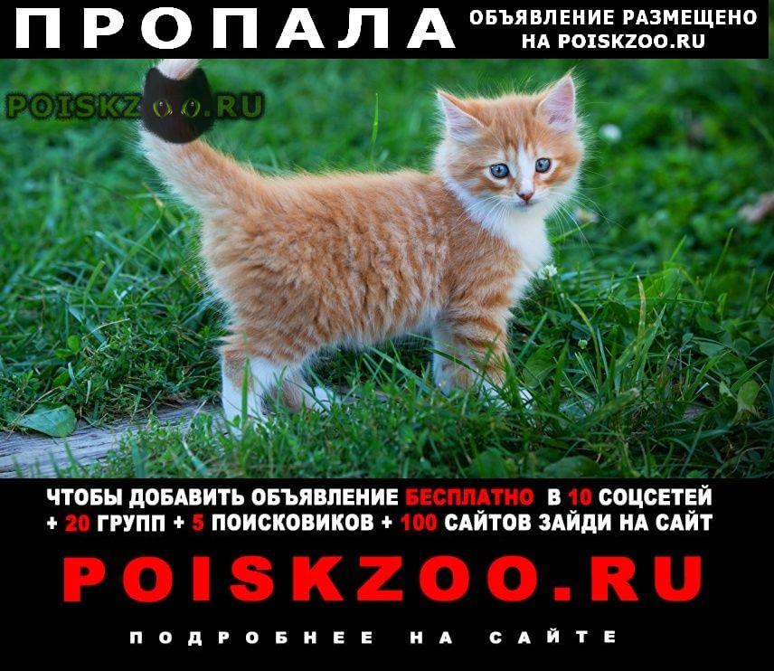 Пропала кошка в севастополе  г.Севастополь