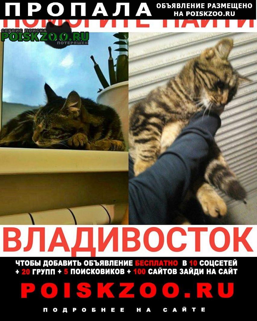 Пропала кошка г. Владивосток
