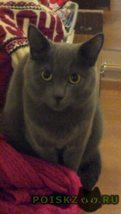Пропала кошка г.Зеленоград
