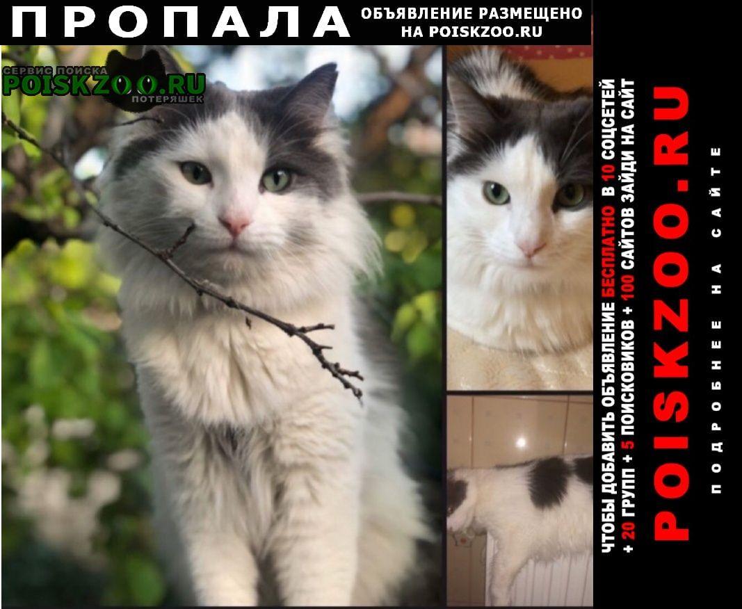Симферополь Пропала кошка