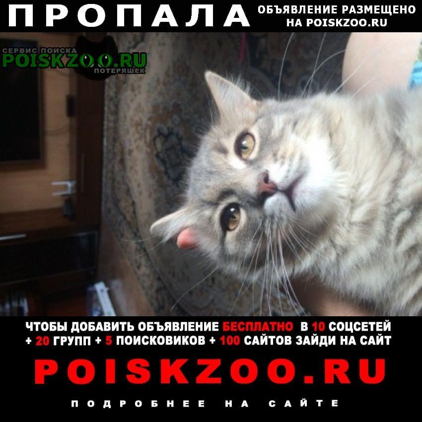 Пропал кот Пенза