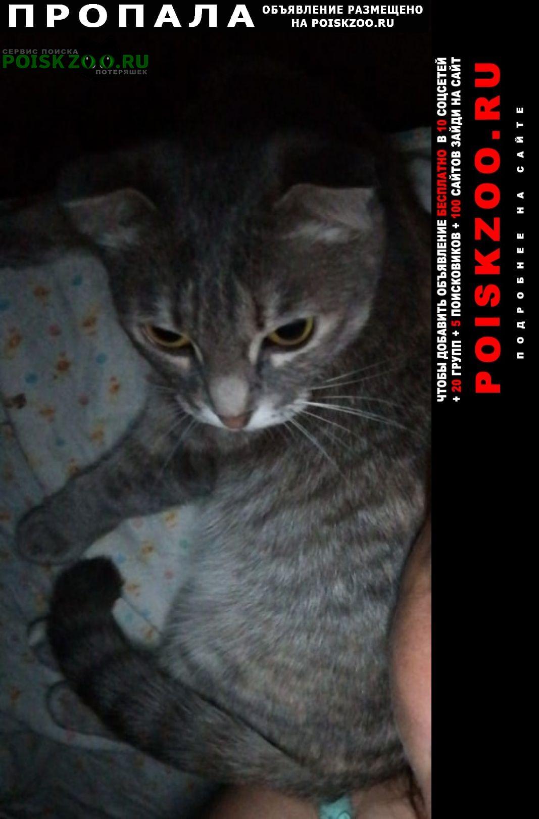 Пропала кошка помогите найти, дети переживают Уфа