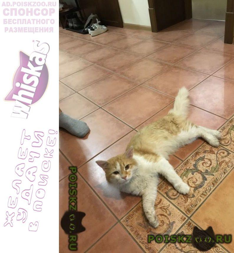 Пропала кошка г.Стерлитамак
